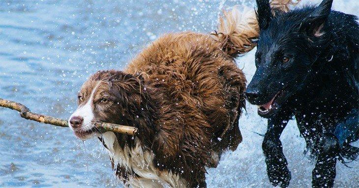 Protection Dog Training1