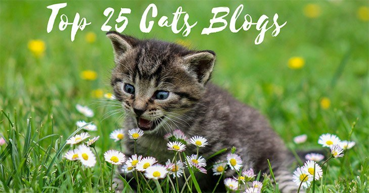 Top 25 Cats Blogs