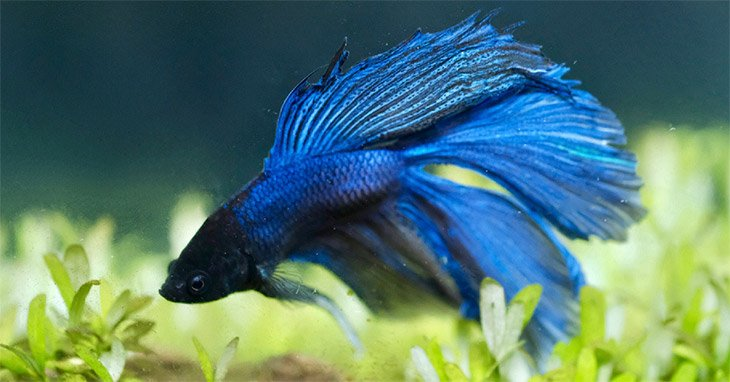 How to Setup a Betta Tank2