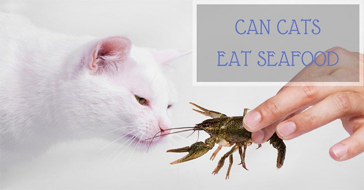 Can Cats Eat Seafood