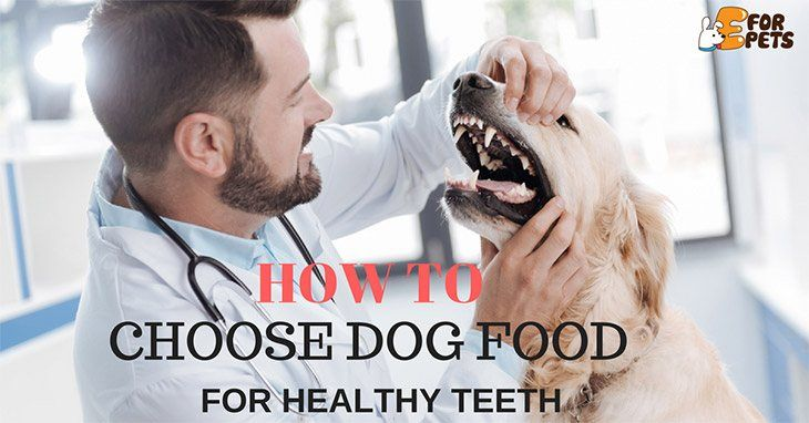 How to Choose Dog Food for Healthy Teeth