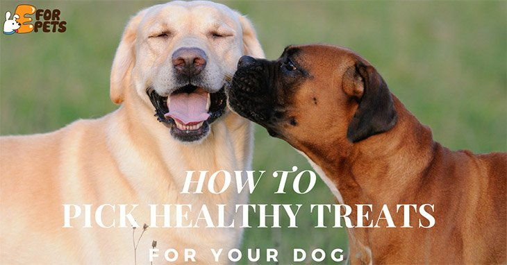 How to Pick Healthy Treats For Your Dog5