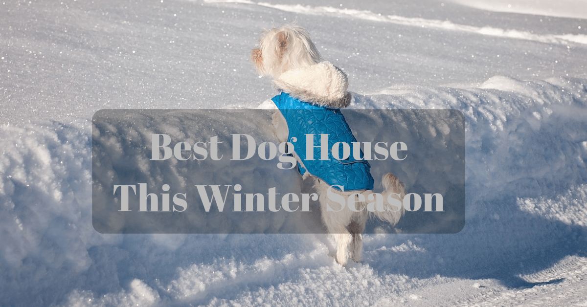 Best Dog House This Winter Season