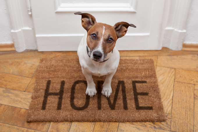 Best Home for Your Dog