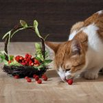Can Cats Eat Strawberry Leaves