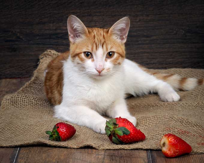 fruits safe for cats