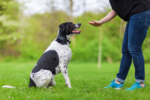 Dog Training in Los Angeles
