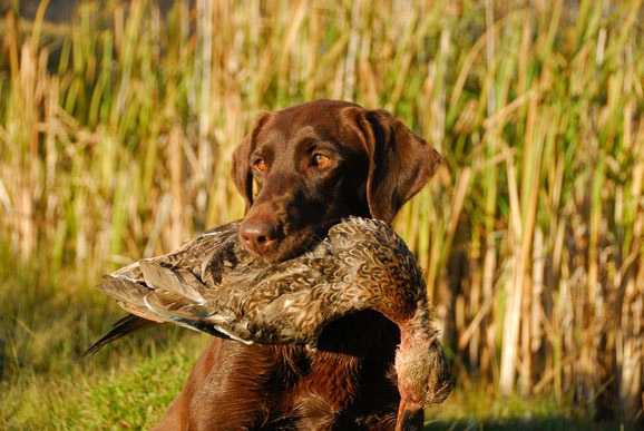 Hunting Training