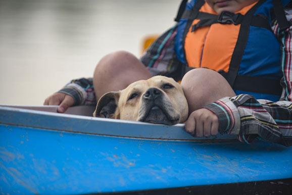 is kayaks safe for dog