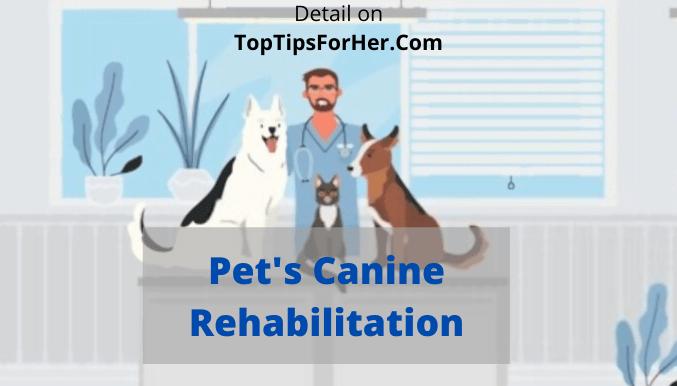 Pet Canine Rehabilitation