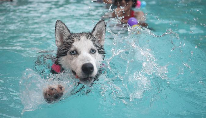 Luxury dog accessories