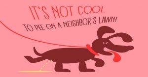 Top 10 Dog Walking Accessories
