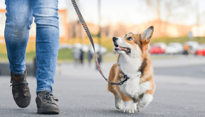 What do you do with dog poop while walking
