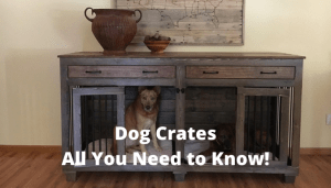 Dog Crates All You Need to Know!