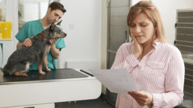 vet Rescue Dog