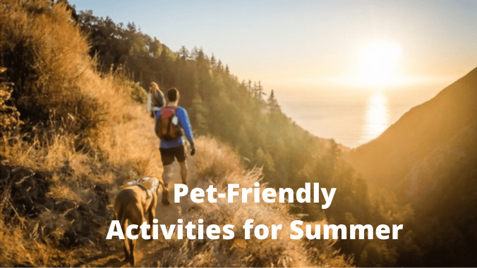 Pet-Friendly Activities for Summer