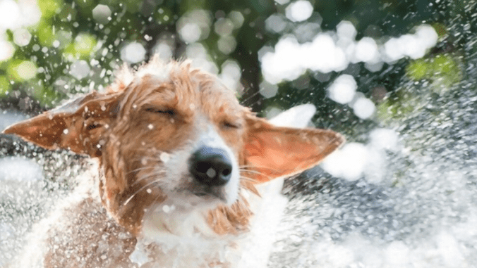 dog play in water park